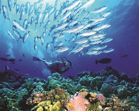 Australia Diving Holidays: Great Barrier Reef - Frequently