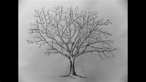 How to draw a Tree with pencil step by step - YouTube