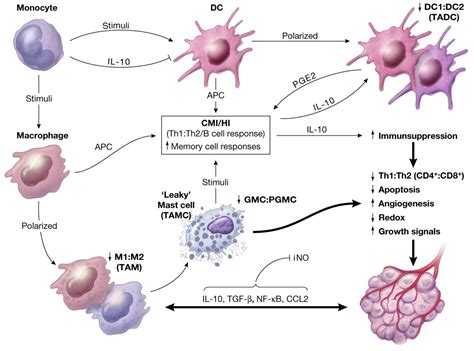 Cancers | Free Full-Text | Chronic Inflammation