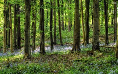 Nice Forest & Flowers wallpapers | Nice Forest & Flowers