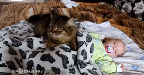Cat Snuggles With Human Baby [VIDEO] - CatTime