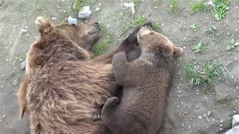 The cutest bears ever: mom with her cub - YouTube